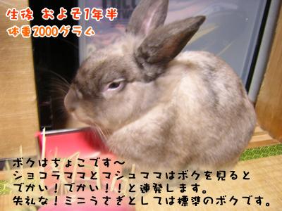 choko_0906.jpg