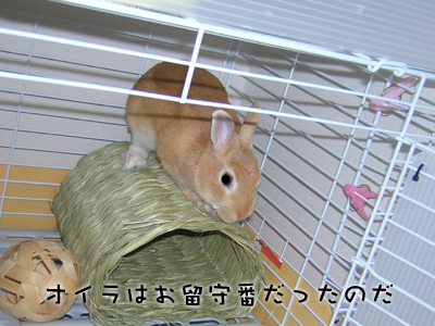 kyouto05.jpg