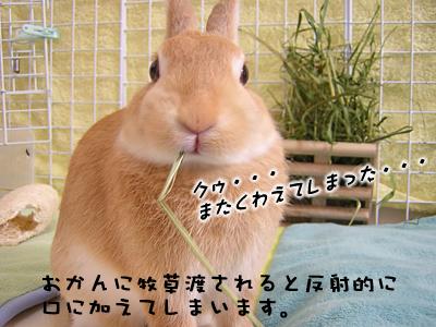 mashu0123_02.jpg