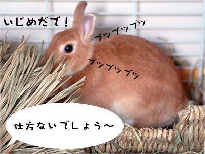 mashu0220_4.jpg