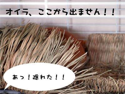 mashu0220_6.jpg