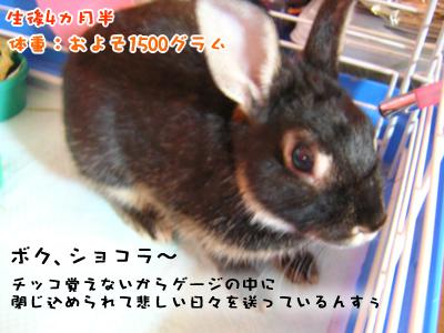shokora_1.jpg